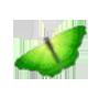 腾讯QQ号码申请器 v8.8.8_cai